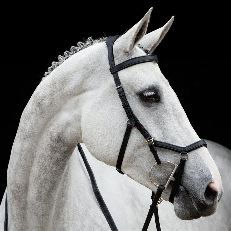 billiga träns häst