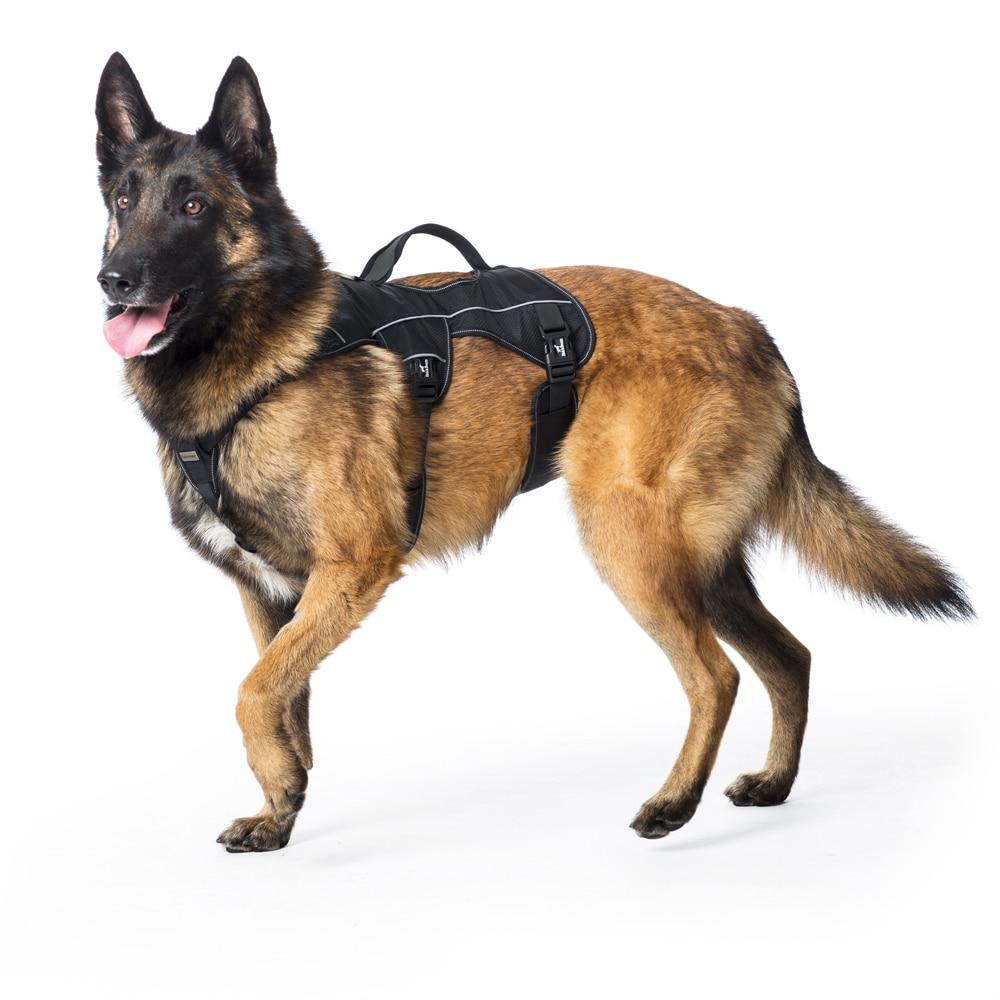 Hundsele  Trekking Showmaster®