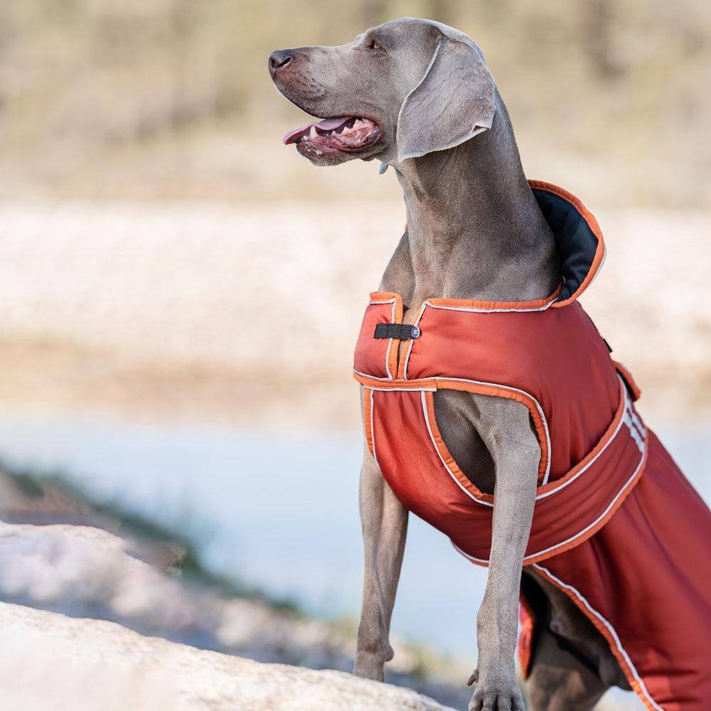 Hundtäcke  Trysil Winter traxx®