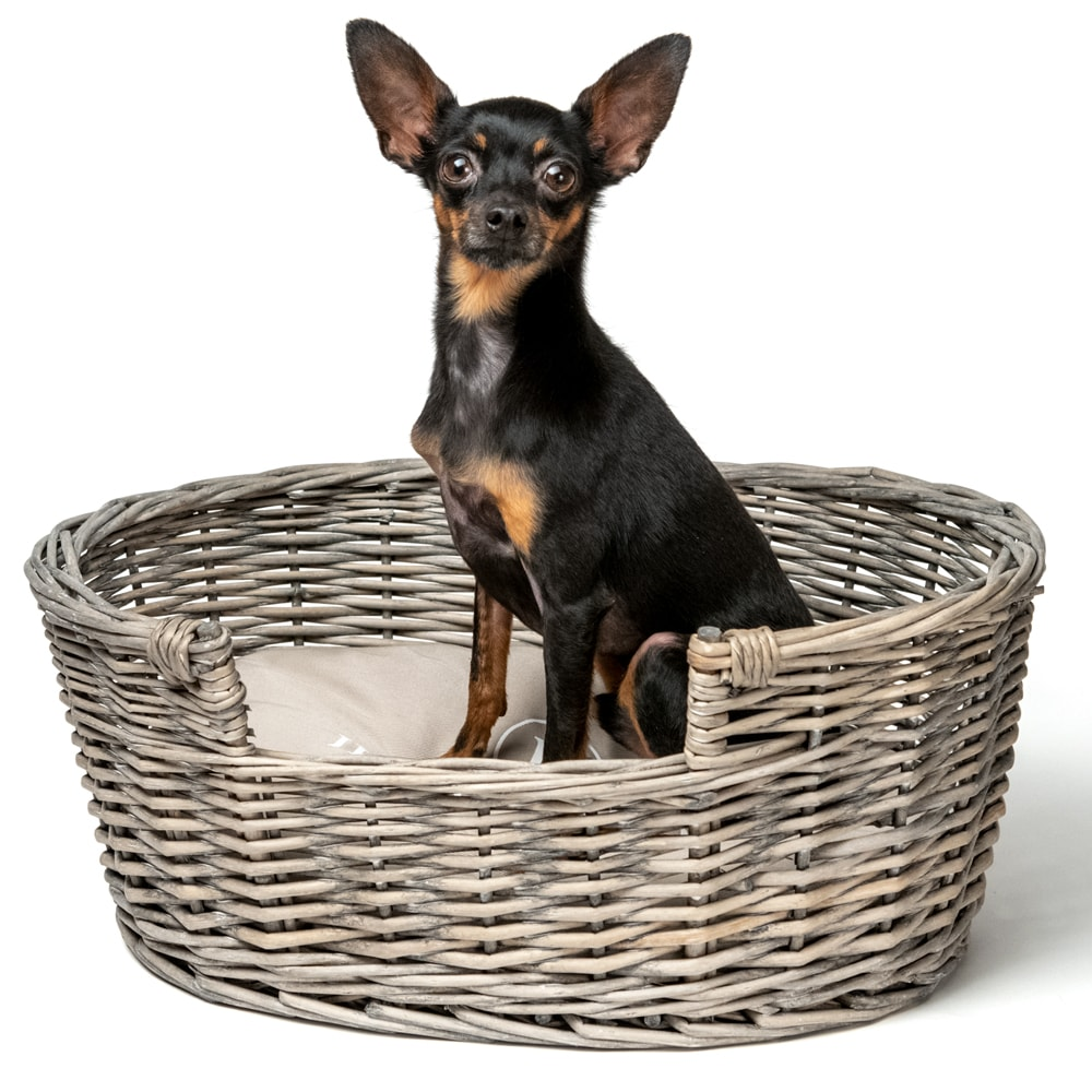 Hundkorg  Volterra JH Collection®