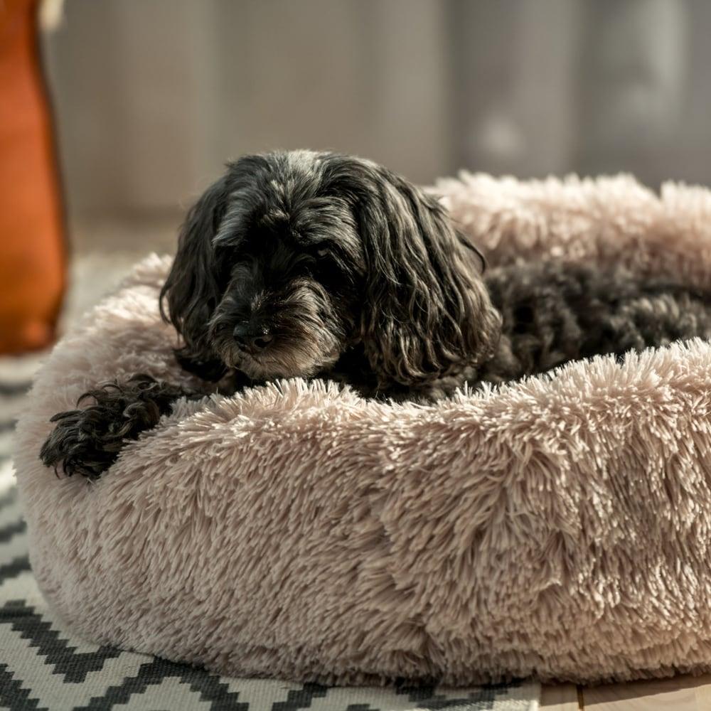 Hundbädd  Donut Showmaster®