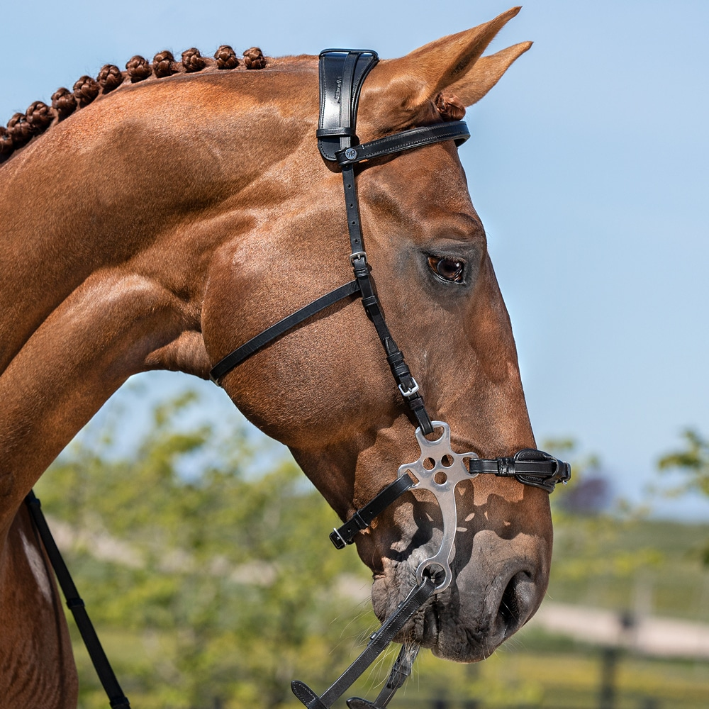 Hackamore   Fairfield®