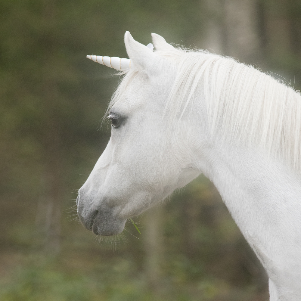 Spänne  Unicorn